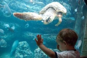 Using the CityPASS to explore the Georgia Aquarium