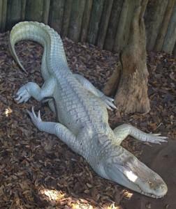 alligatorfarm_albinogator